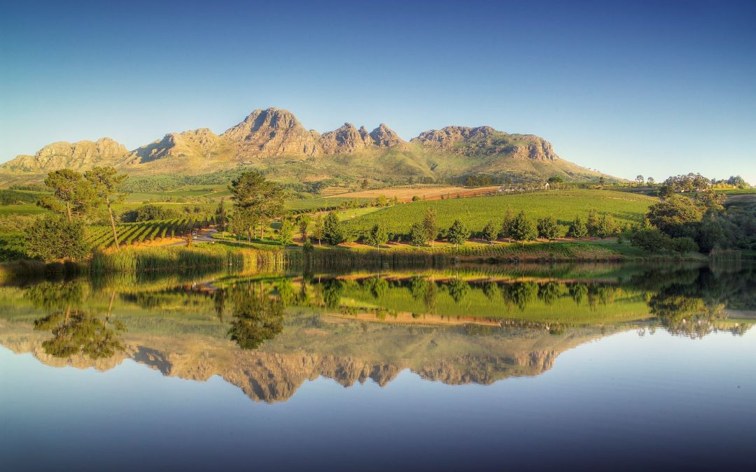 Stellenbosch wine region combats climate change